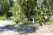 Site marker #2 in front of saw palmetto, sable palm and vines on gray ground with some grass and pine needles.
