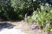Utility posts beneath shade trees and palmetto to the right.