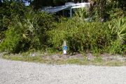 Site marker for #8 shows blue & white ADA symbol. Asphalt entrance with saw palmetto and vines between sites.