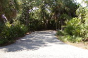 Asphalt paving from road to back of site with pine, palm and saw palmetto on edges.