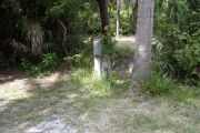 Utility posts in green grass next to palm trunk