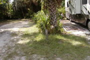 Site marker in grassy ground with palm and palmetto between sites.