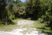 gray ground with grassy edges has picnic table on the left and ground grill and clothes post in the back with palms and oaks