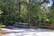 A fire ring and picnic table surrounded by dense green vegetation and rustic wooden fencing on campsite number one at Lake Griffin State Park