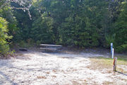 Dense green vegetation surrounds a fire ring and picnic table on campsite number fifteen at Lake Griffin State Park