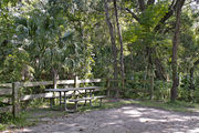 A picnic table, fire ring, and rustic wooden fencing are surrounded by a mixed oak hardwood and sabal palm forest on campsite number twenty-one at Lake Griffin State Park