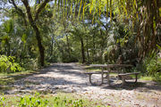 A picnic table and fire ring are surrounded by a mixed oak hardwood and sabal palm forest on campsite number twenty-two at Lake Griffin State Park