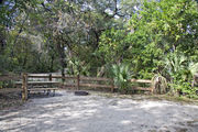 A picnic table, fire ring, and rustic wooden fencing are surrounded by a mixed oak hardwood and sabal palm forest on campsite number twenty-four at Lake Griffin State Park