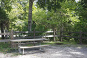 A picnic table, fire ring, and rustic wooden fencing are surrounded by dense green vegetation and hardwood trees on campsite number thirty-one at Lake Griffin State Park
