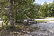 A picnic table and fire ring sit adjacent to a large cedar tree on campsite number thirty-five at Lake Griffin State Park