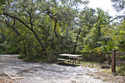 A picnic table, fire ring, rustic wooden fencing, and a concrete runner strip are surrounded by dense green vegetation on campsite number thirty-seven at Lake Griffin State Park