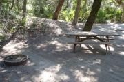 Lush vegetation of palmettos shading an open campsite with a picnic table and fire ring.