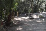Lush vegetation of Spanish moss draped live oak, sable palm, cedar, and palmetto shading an open campsite with a picnic table, fire ring, and electrical hook-up stanchion.