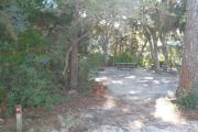 Lush vegetation of Spanish moss draped live oak, and red cedar shading an open campsite with a picnic table, fire ring, cloths line, and electric hook-up stanchion.