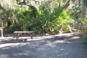 Lush vegetation of Spanish moss draped live oak, red cedar, and palmetto surrounding an open campsite with a picnic table, fire ring, and cloths line.