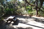 Lush vegetation of Spanish moss draped live oak, red cedar, and palmettos surrounding an open campsite with a picnic table and cloths line.