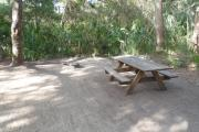 Lush vegetation of live oak and palmetto surrounding an open campsite with a picnic table and fire ring.