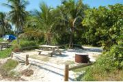 Photo: 004, View from shore line over fence rails with picnic table and fire ring to the front. Palm trees Buttonwood trees and a Sea Grape are in the buffers around the site. A picnic table and blue tent are visible in adjoining sites to the left.