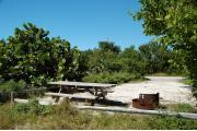 Photo: 023, Looking from the shoreline, the picnic table and fire ring are just inside the fence rails. Thatch palm, sea grape, mangrove and buttonwood trees line the sides of the site.