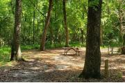 A Hardwood Hammock with scattered palmetto's and grasses surrounds this large open campsite.  Site is mostly shaded with water/electric on right of site along with fire ring, picnic table and cloths line posts.  Site is level.