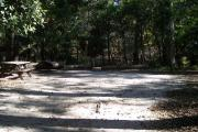A Hardwood Hammock with scattered palmetto's and grasses surrounds this open campsite.  This campsite overlooks a small beautiful spring called Sue Sink.  Site is mostly shaded with water/electric on right of site along with fire ring, picnic table and cloths line posts.  Site has downward slope.