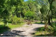 A Hardwood Hammock with scattered palmetto's and grasses surrounds the campsite.  Site has a narrow opening but widens nicely for privacy at the back of site.