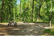 A Hardwood Hammock with scattered palmetto's and grasses surrounds the campsite.  Here campers sit outside there fifth wheel and enjoy a pleasant conversation in the quiet hammock.  This site has an upward slope and is mostly shaded, water/electric on right of site, along with fire ring, picnic table and cloths line posts.
