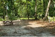 A Hardwood Hammock with scattered palmetto's and grasses surrounds the campsite marker.