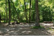 A Hardwood Hammock with scattered palmetto's and grasses surrounds the campsite.  This large open site has a fire ring, picnic table and cloths line posts along with water/electric on right of site.  This site is level.