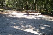 A Hardwood Hammock with scattered palmetto's and grasses surrounds this open campsite.  This campsite overlooks a small beautiful spring called Sue Sink.  Site is mostly shaded with water/electric on right of site.  Site has downward slope along with fire ring, picnic table and cloths line posts.