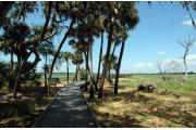 Walkway onto the Upper Myakka Lake for bird observation and scenic views.