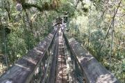 Take a walk through the tree canopy on a suspension bridge and look into the tree tops, then climb the tower and see a beautiful vista of Myakka River State Park.
