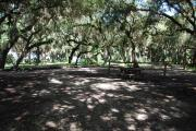 This is a picture of campsite 8 from the back of the site looking toward the road.   The site has water and 50amp electric service.  This is a partly sunny site with a gravel foundation.  The site has a picnic table and a ground campfire ring.