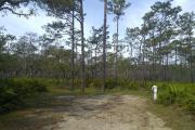 This site sits on the edge of a Pine Flatwoods habitat, offering great birding and wildlife viewing.