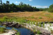 The steephead restoration area with newly planted vegetation planted where the lake used to be located at Fred Gannon Rocky Bayou State Park.
