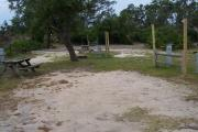 An open and airy campsite with a mixture of grass and pine straw on the ground is located under the tall pines.