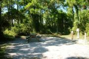 A shell base campsite with native pine trees in the background.  This site has partial shade.