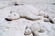 This a picture of two sea turtles sculpted from the sand at St. Joseph Peninsula State Park.