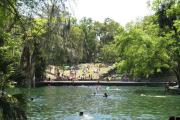 The spring on a busy summer day.  People are enjoying the Florida sun in the water, in the shade of the trees on the bulkhead, and on picnic blankets on the grassy slope overlooking the spring.