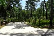 This photo illustrates the Pine and Oak vegetation surrounding the campsite.