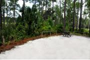 This photo shows the surrounding Pine, Palm and low vegetation around this site.
