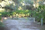 30x34 foot shell rock campsite with picnic table, grill, water and electric hook ups surrounded by saw palmetto.