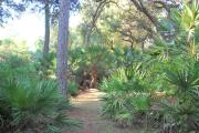 Narrow pathway at back of site surrounded by saw palmetto with one pine tree along path.