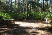 28x23 foot shell rock camp site covered with pine needles with electric and water hook ups. Surrounded by saw palmetto with large pine trees in rear of site.