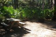 Picnic table and fire grill with saw palmetto and several pine trees behind them.