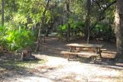 Picnic table and fire pit/grill under an oak tree in the middle site, in rear small oaks and saw palmetto.