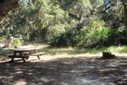 Picnic table and fire pit/grill at rear of site partially under an oak tree with saw palmetto and woods behind.