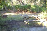 Picnic table and fire pit/grill shaded under large oak tree surrounded by saw palmetto.