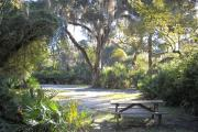 The view from the rear of the site facing the road mostly shaded under oak trees and surrounded by saw palmetto.