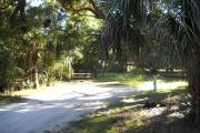 40x19 foot shell rock site with water and electric hook ups. A cabbage palm stands at the front right side of the site. Picnic table and small cabbage palm in rear.